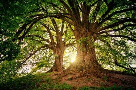 tree-3822149_640